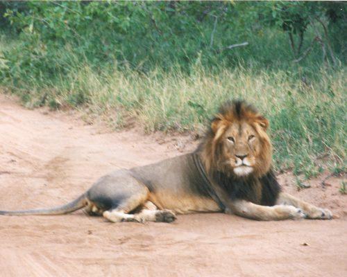 leeuw-kruger