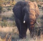 safari_1