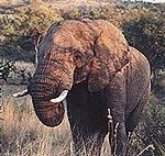 south_africa_3