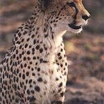 south_africa_4