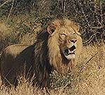 south_africa_5